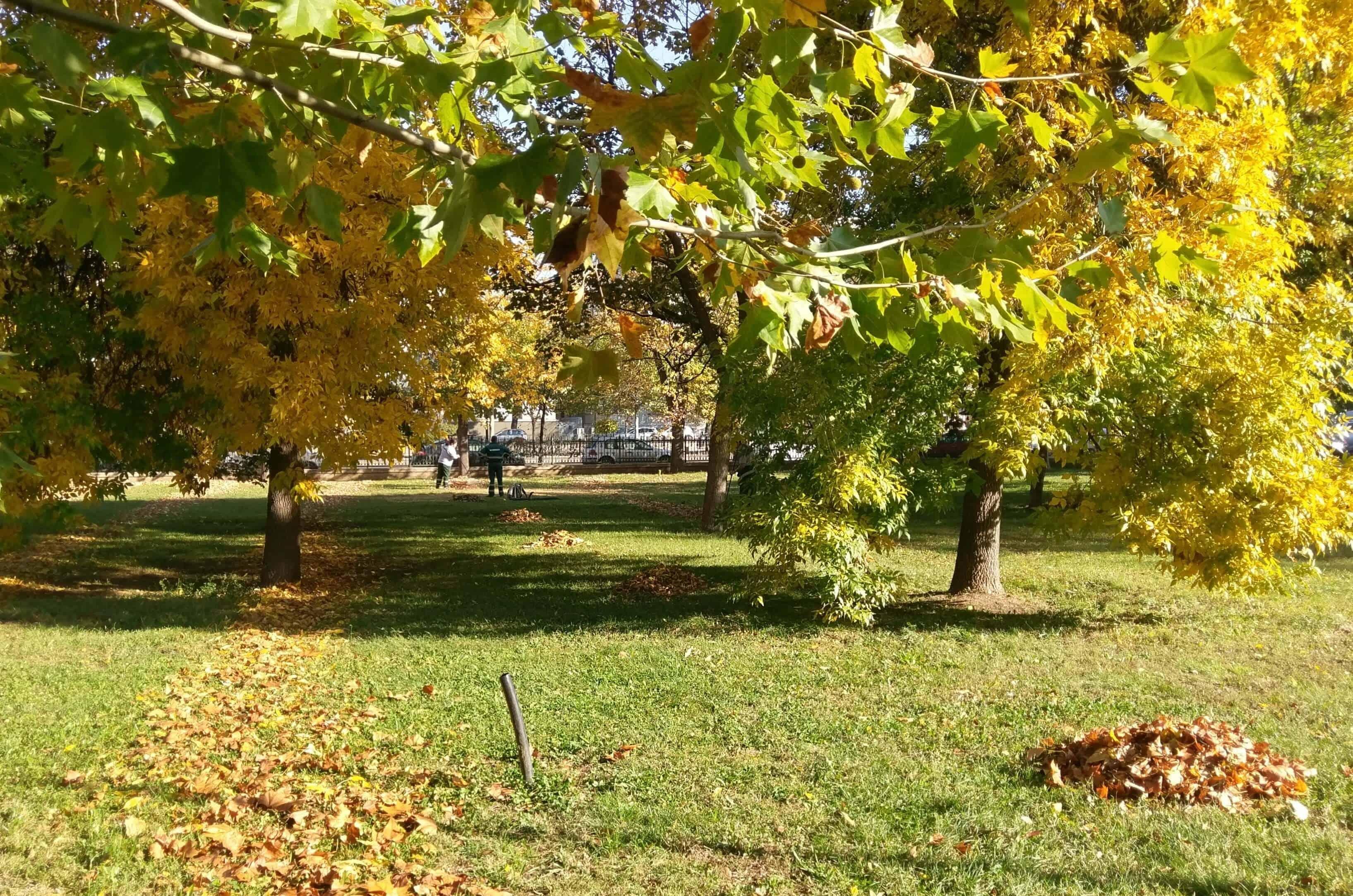 stransul frunzelor in Parcul Izvor octombrie 2017