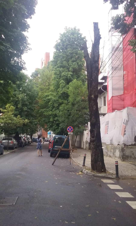 arbore uscat Bucuresti