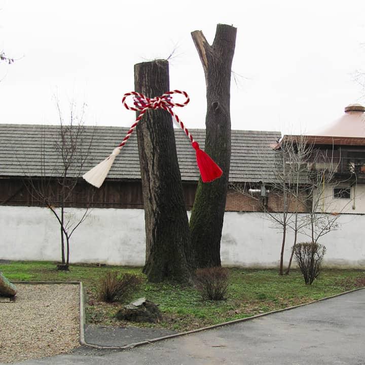 arbore toaletat Bucuresti